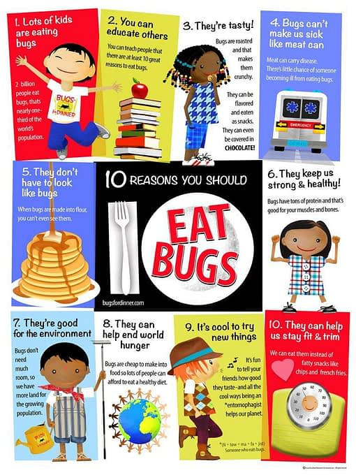 EDIBLE INSECTS EDUCATIONAL POSTER