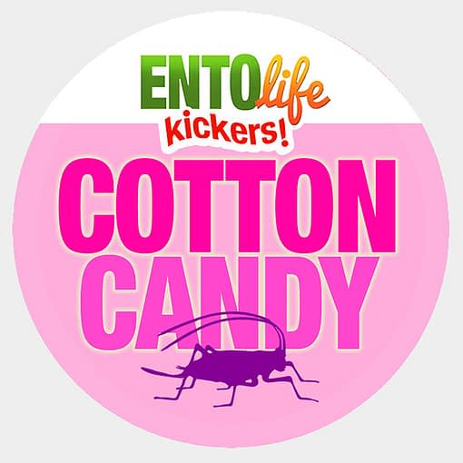 Mini-Kickers | Cotton Candy Flavored Crickets