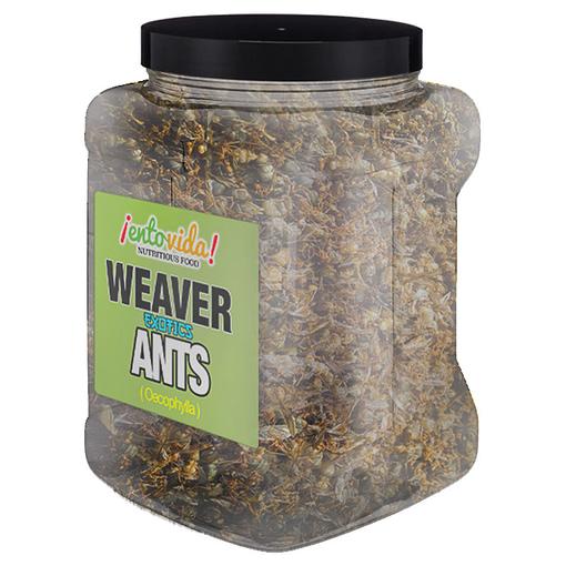 Weaver Ants Wholesale
