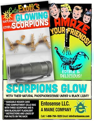 Scorpions Glow Kit For Sale