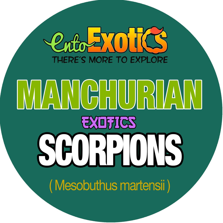 Bulk Scorpions