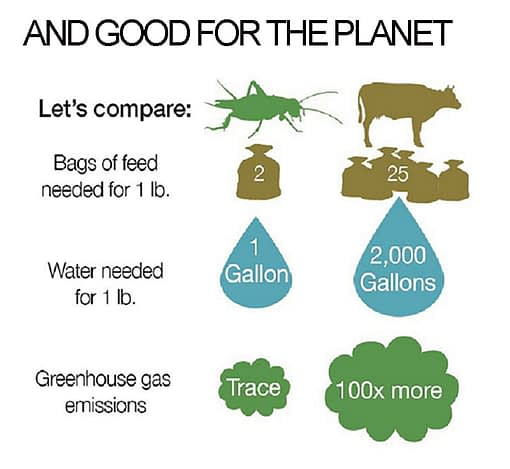 Edible Insects are Good for the Planet