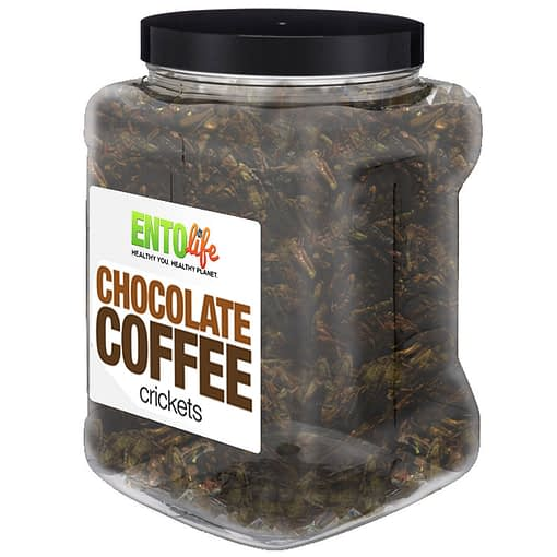 Chocolate Coffee Crickets Bulk